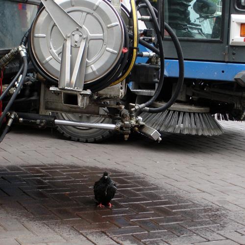 Improvised Amsterdam Bird Bath